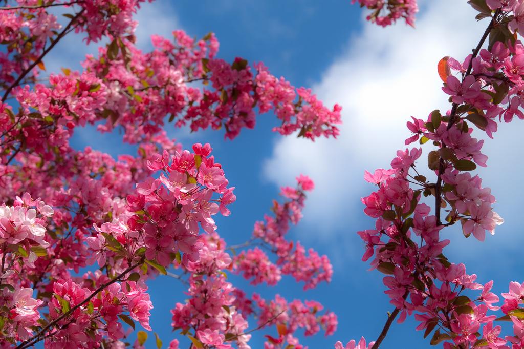 Spring (33 days to go) 090422_-_0006