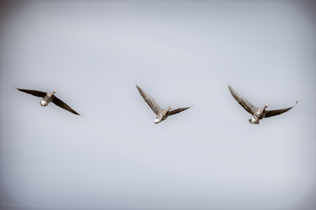 Flight frozen PICT0086