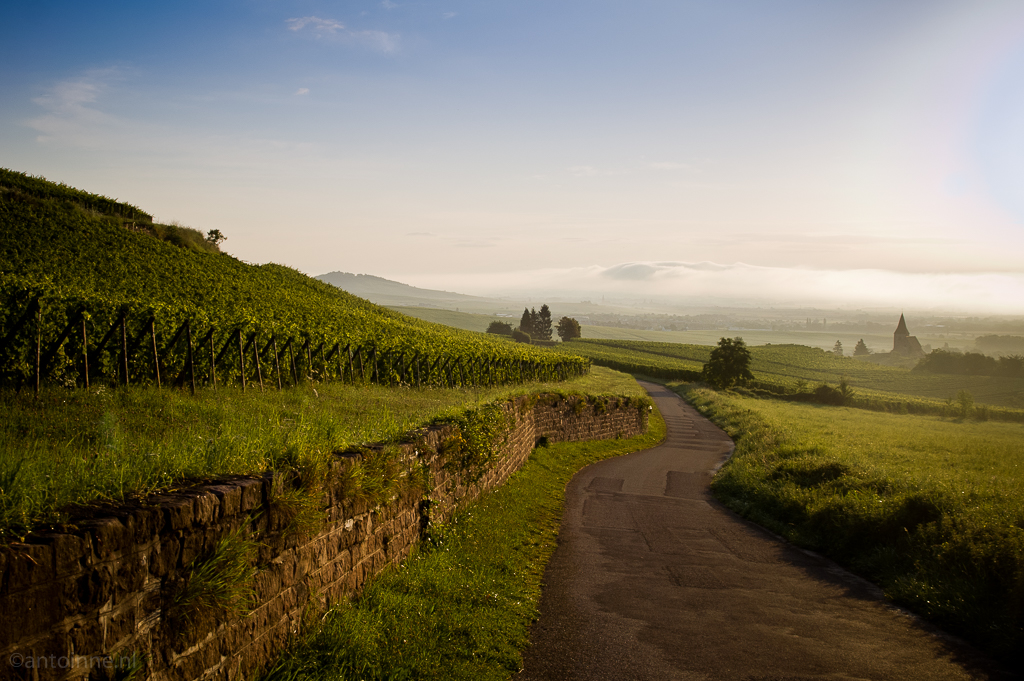 Sunrise at the vineyards near Riquewihr (Alsace) PICT0021_5