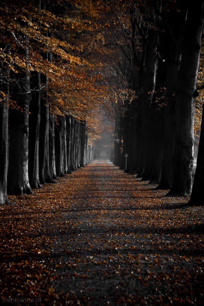 Herfst op Landgoed Groeneveld - 20141125-SLT-A99V-DSC05486