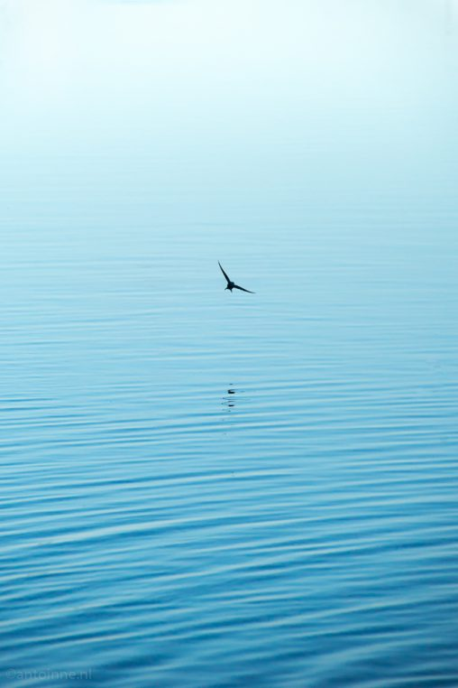Een zwaluw in de zomer - 20160731-SLT-A99V-DSC08801 ed3