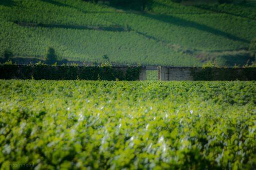 vineyards-beaune-burgundy-20160708-slt-a99v-dsc08547