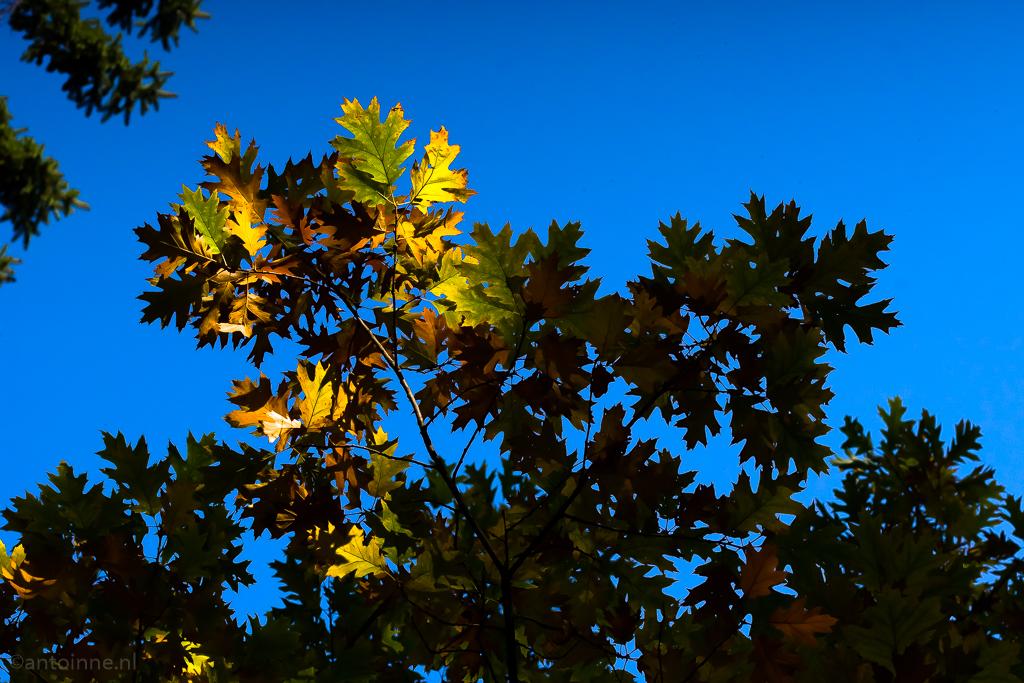 herfstblad-in-het-zonlicht-20161023-slt-a99v-dsc09629