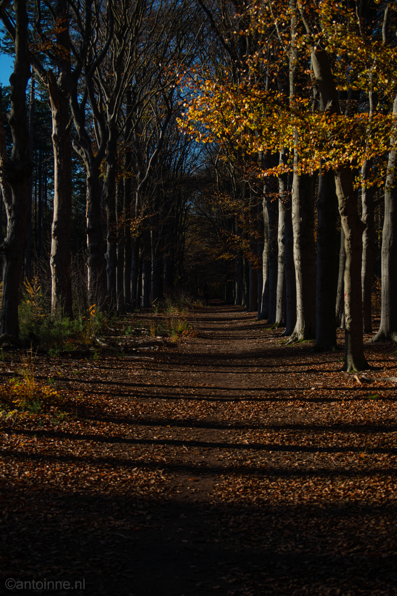 Herfst (Spanderswoud)