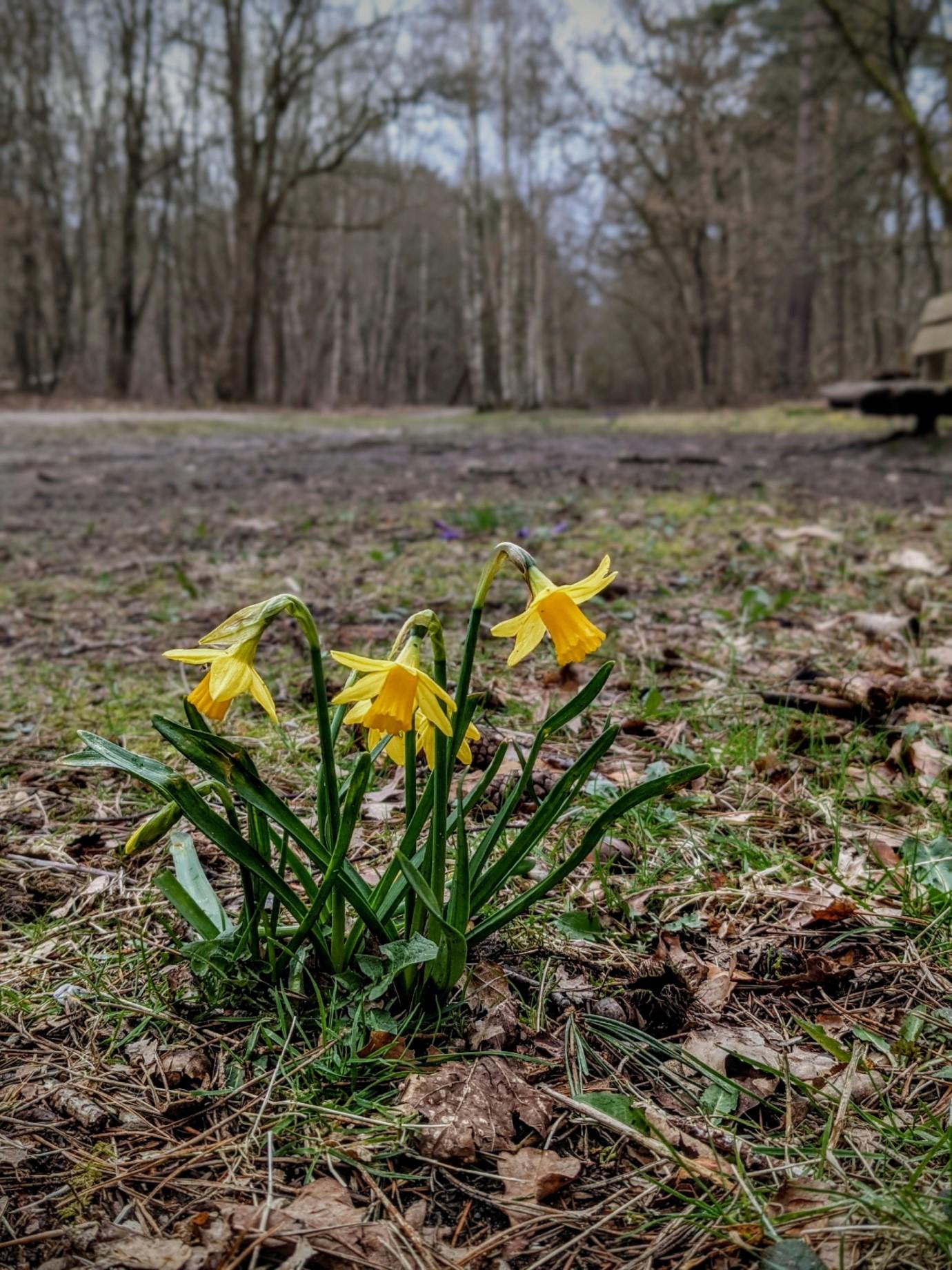 Spring (Spanderswoud)