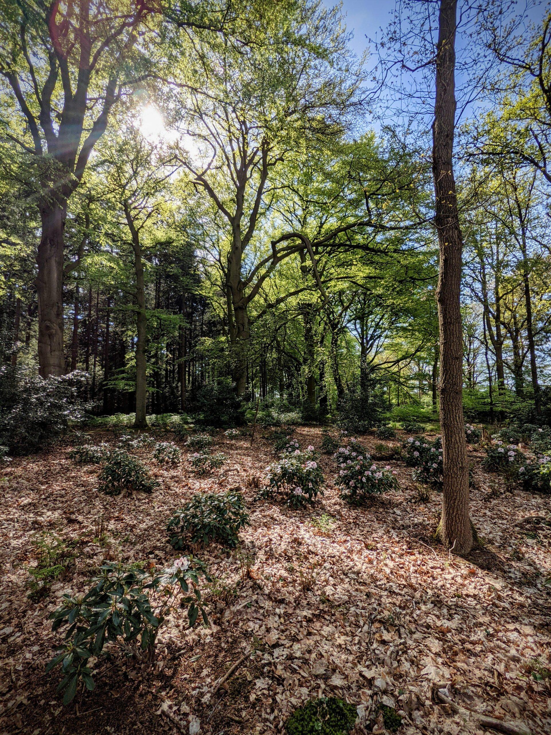 Landgoed Spanderswoud