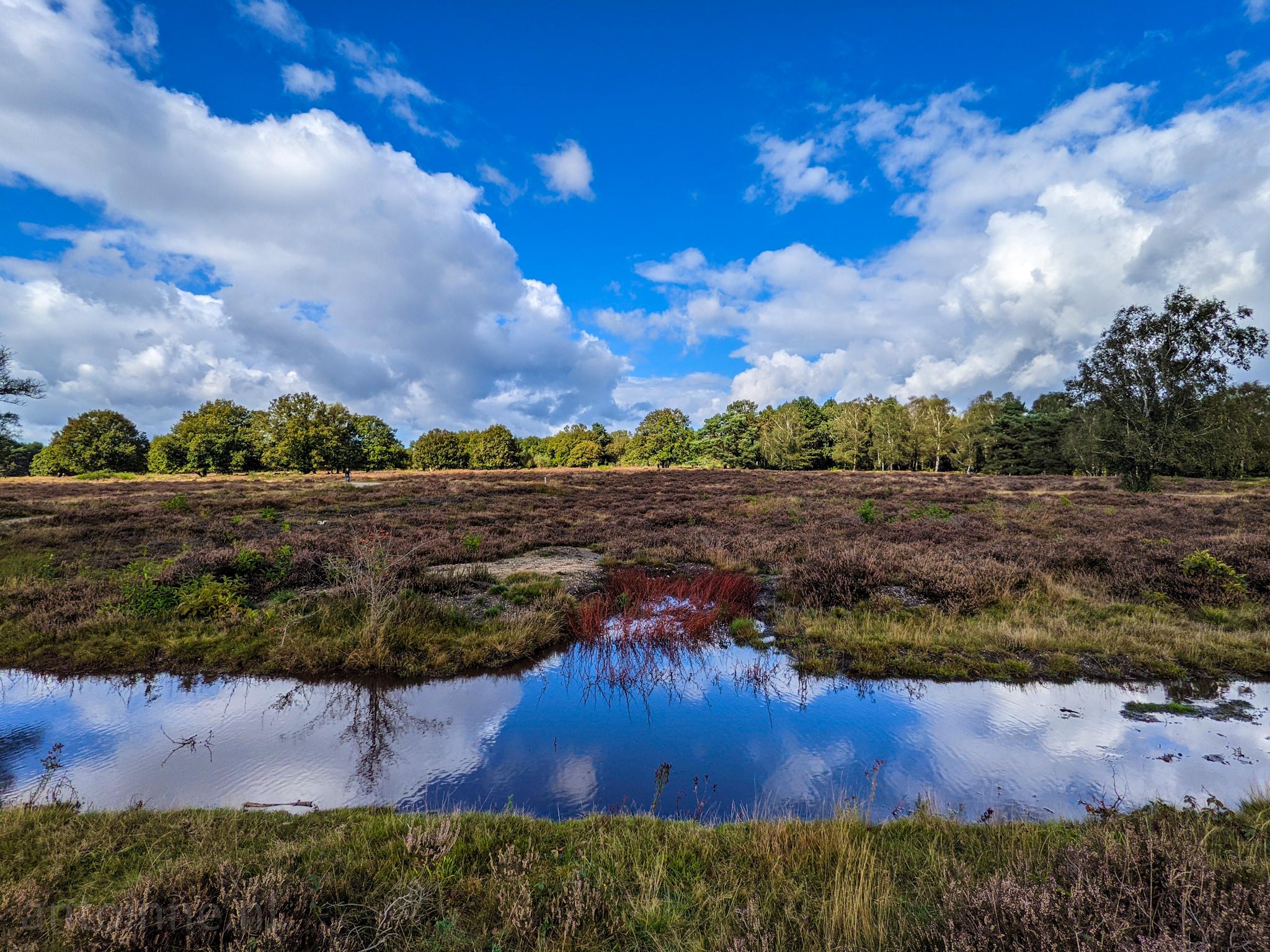 Na de regen (Goois Natuurreservaat Zuiderheide)